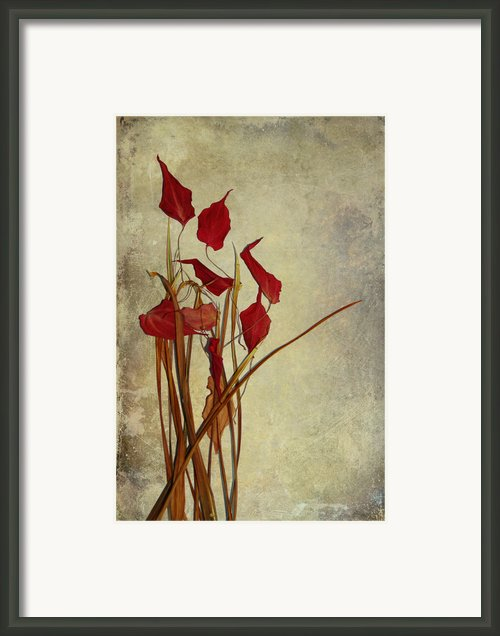 Nature Morte Du Moment Framed Print By Aimelle