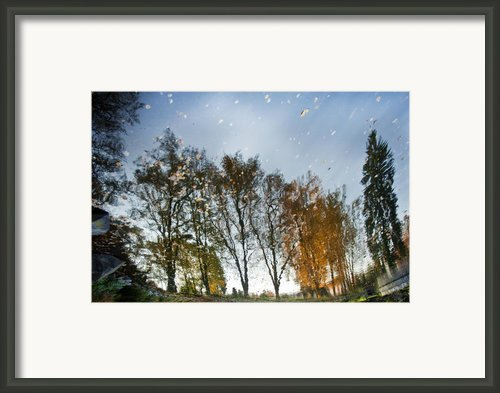 Naturpainting Vi Framed Print By Renata Vogl