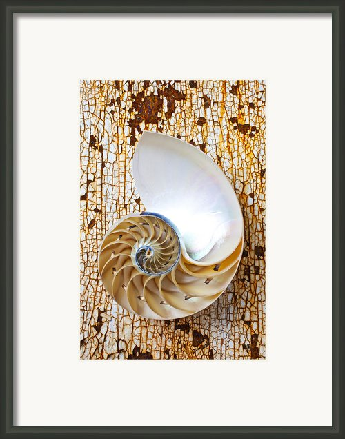 Nautilus Shell On Rusty Table Framed Print By Garry Gay