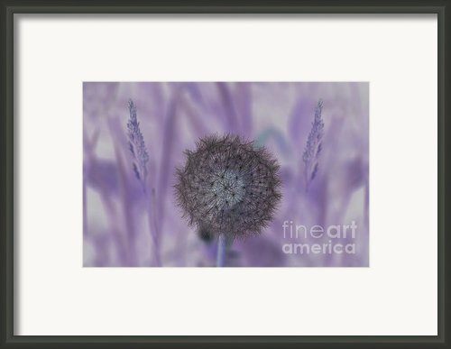 Navigating The Purple Haze Framed Print By The Stone Age