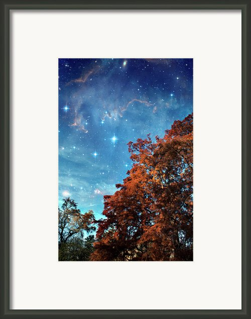 Nebula Treescape Framed Print By Paul Grand Image