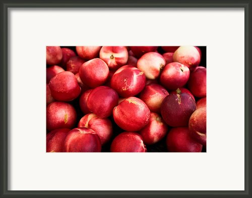 Nectarines Framed Print By Tanya Harrison
