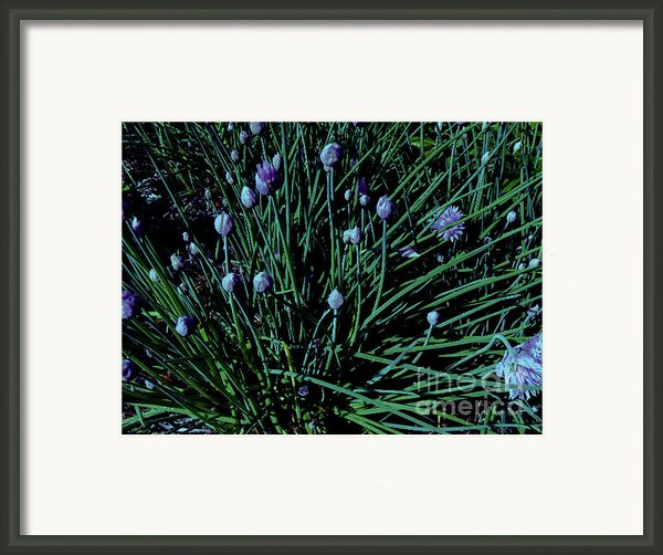 Neon Chives 2 Framed Print By Cheryl Raber