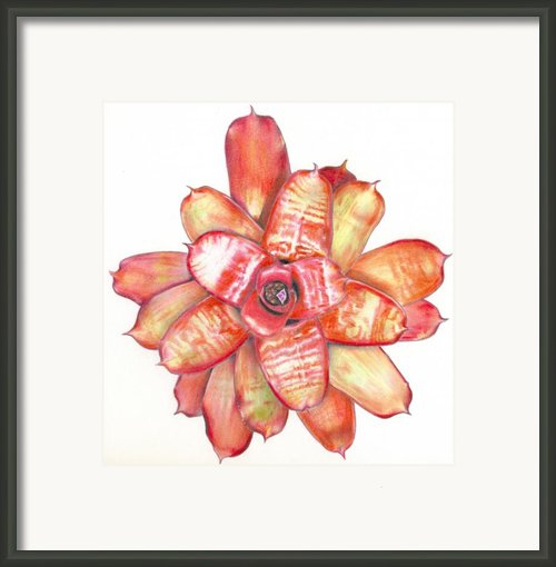 Neoregelia Small Wonder Framed Print By Penrith Goff