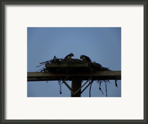 Nesting Again Framed Print By Laurie Kidd