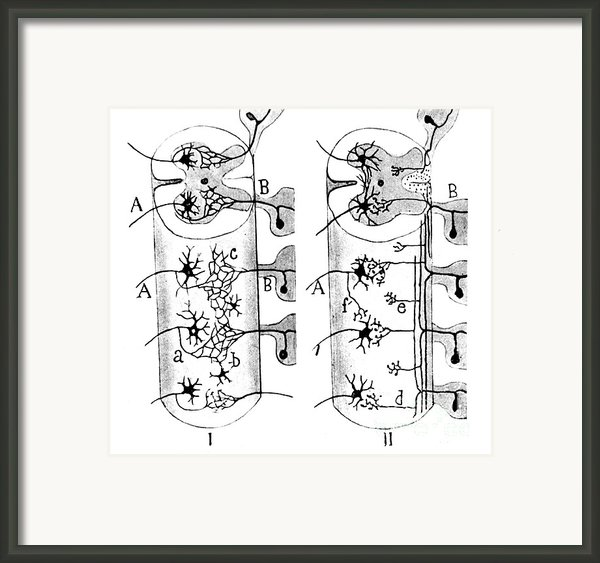 Neuroglia Cells Illustrated By Cajal Framed Print By Science Source