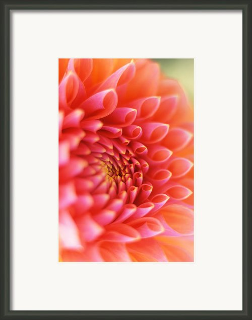 New Beginnings Framed Print By Kathy Yates