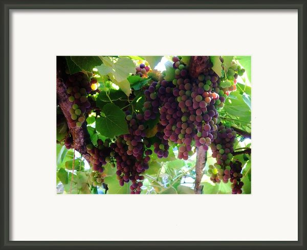 New Wine Framed Print By Alison Richardson-douglas