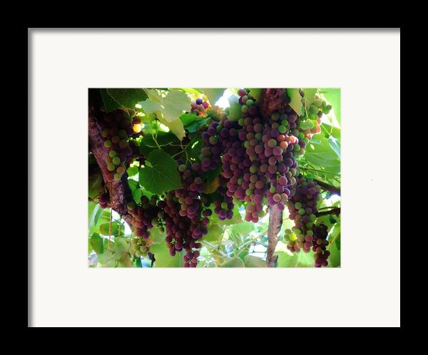 New Wine Framed Print By Alison Richardson-douglas