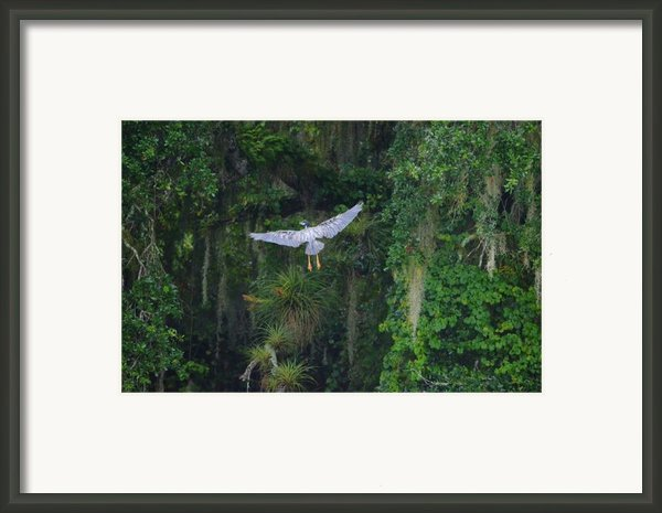 Night Flight Framed Print By Lynda Dawson-youngclaus