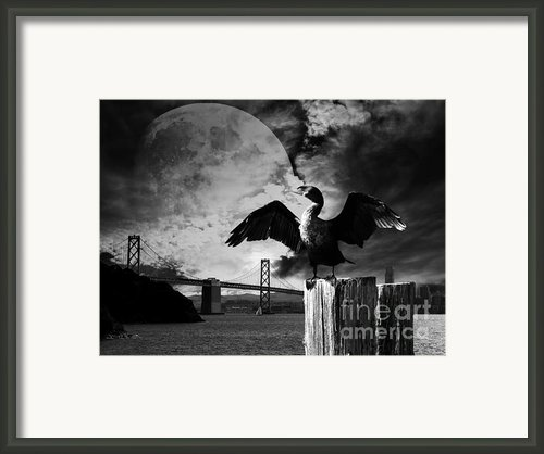 Night Of The Cormorant . Black And White Framed Print By Wingsdomain Art And Photography