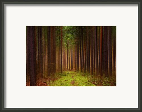 No Way Out Framed Print By Svetlana Sewell