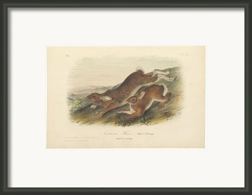 Northern Hare Framed Print By John James Audubon