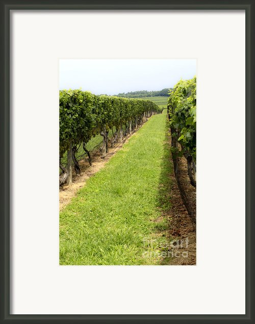 Northfork Vineyard Framed Print By Leslie Leda