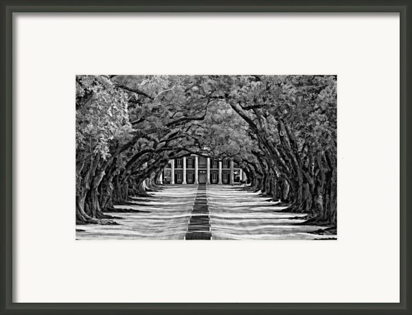 Oak Alley Monochrome Framed Print By Steve Harrington
