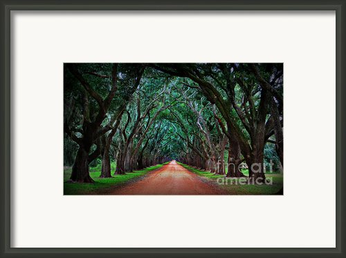 Oak Alley Road Framed Print By Perry Webster
