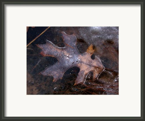 Oak Preservation Framed Print By Adam Long