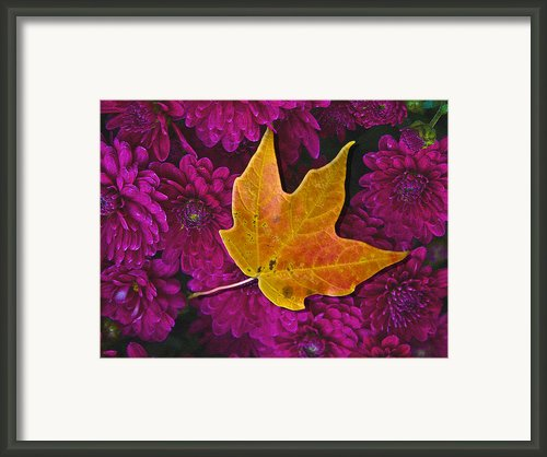October Hues Framed Print By Paul Wear