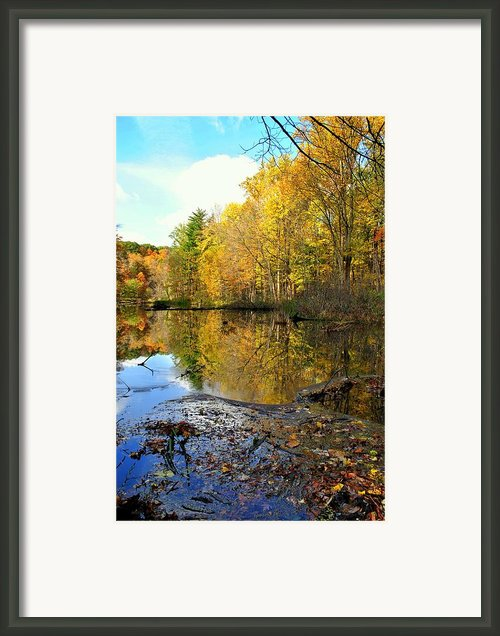 Oil Slick Framed Print By Robert Harmon