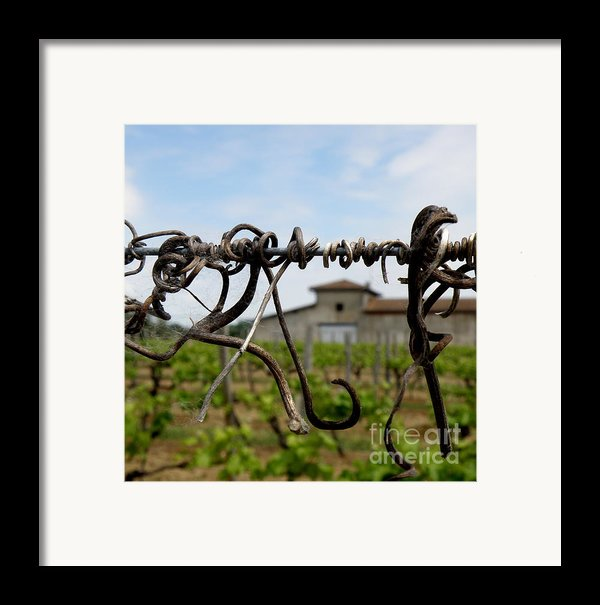 Old And New  Framed Print By Lainie Wrightson