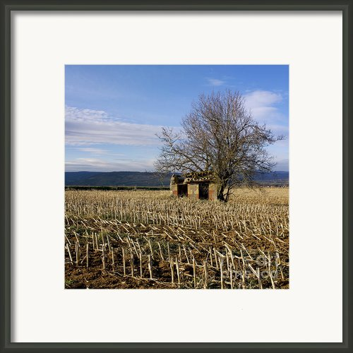 Old Hut Isolated In A Field. Auvergne. France Framed Print By Bernard Jaubert