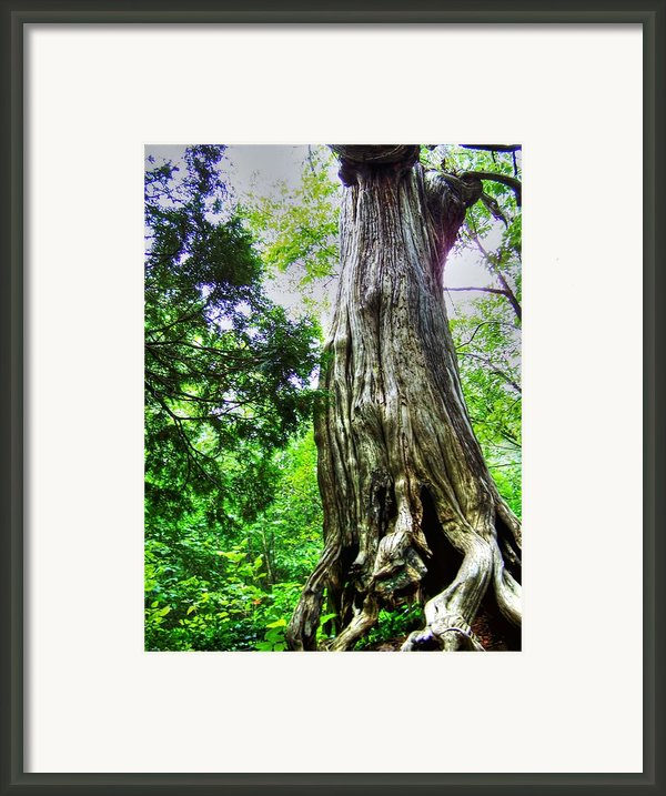 Old Man Framed Print By Dan Stone
