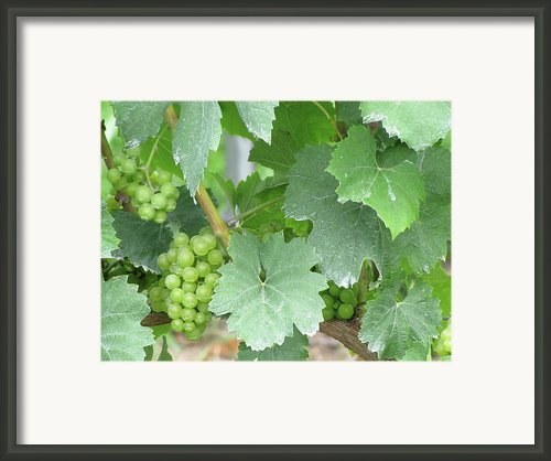 Old Mission Jewels Framed Print By Kelly Mezzapelle