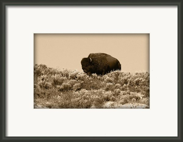 Old Timer Framed Print By Shane Bechler