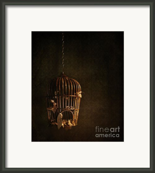 Old Wooden Bird Cage With Feathers Framed Print By Sandra Cunningham