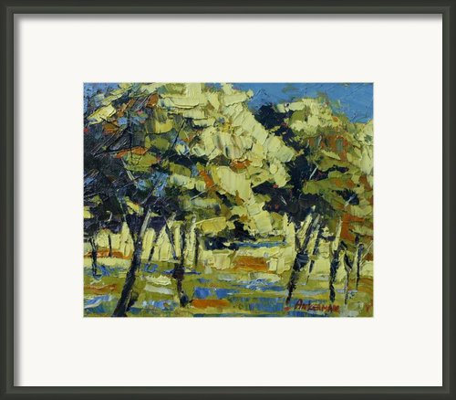 Olive Grove Framed Print By Yvonne Ankerman
