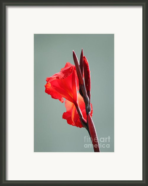 On Fire Framed Print By Suzanne Gaff