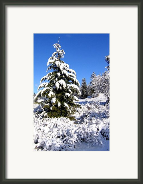 On The Bright Side Framed Print By Will Borden