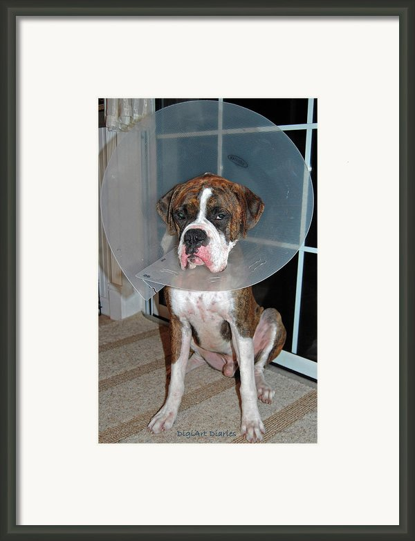 One Biffed Boxer Framed Print By Digiart Diaries By Vicky B Fuller