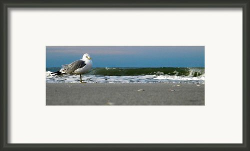 One Bird At A Time Framed Print By Sean Allen