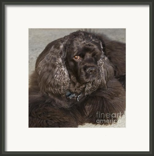 One Eyed Jack Framed Print By Norman  Andrus