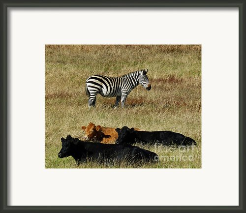 One Is Not Like The Others Framed Print By Methune Hively