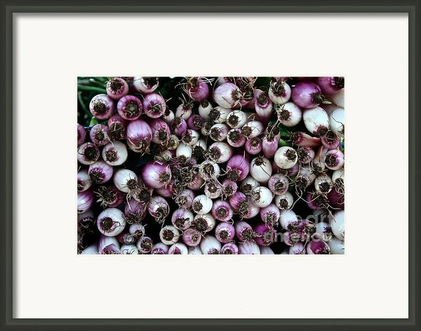 Onion Power Framed Print By Susan Herber