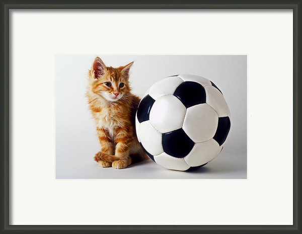 Orange And White Kitten With Soccor Ball Framed Print By Garry Gay