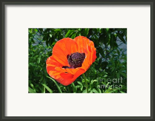 Orange Burst Framed Print By Luke Moore