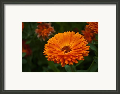 Orange Flower At The Manor Framed Print By Noah Katz