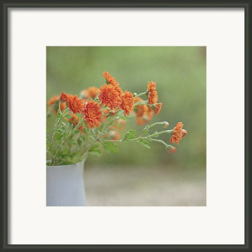 Orange Flower Framed Print By Pamela N. Martin
