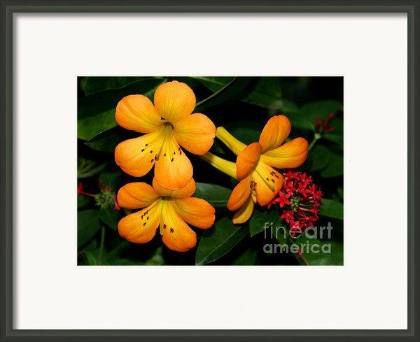 Orange Rhododendron Flowers Framed Print By Sabrina L Ryan