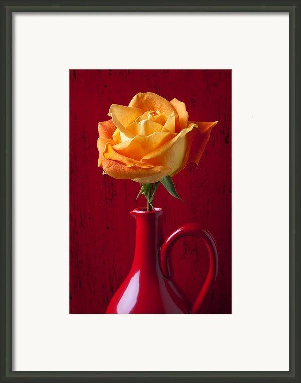 Orange Rose In Red Pitcher Framed Print By Garry Gay