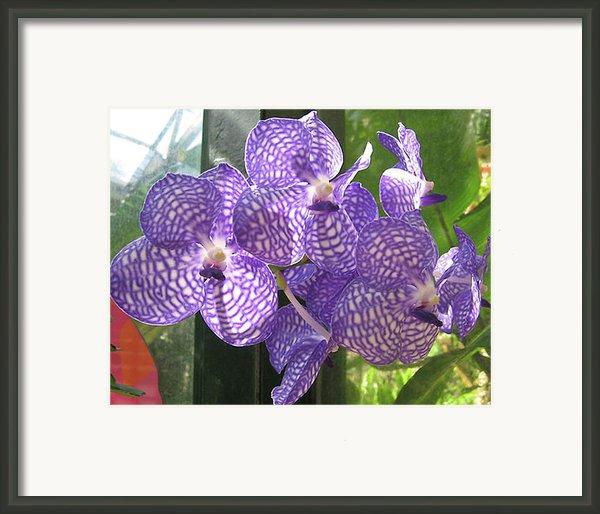 Orchid Framed Print By Darren Stein