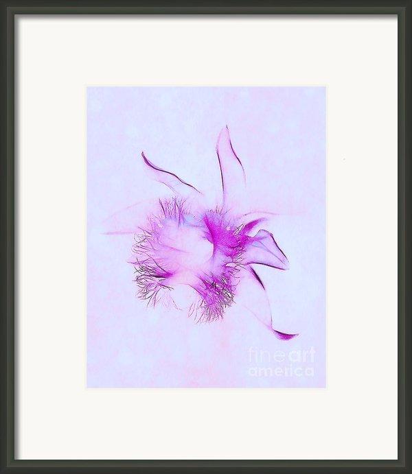 Orchid Impression Framed Print By Judi Bagwell
