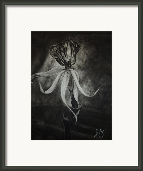 Orchid In Black-and-white Framed Print By Estephy Sabin Figueroa