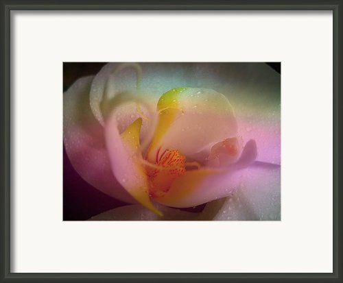 Orchid Splendor Framed Print By Shirley Sirois