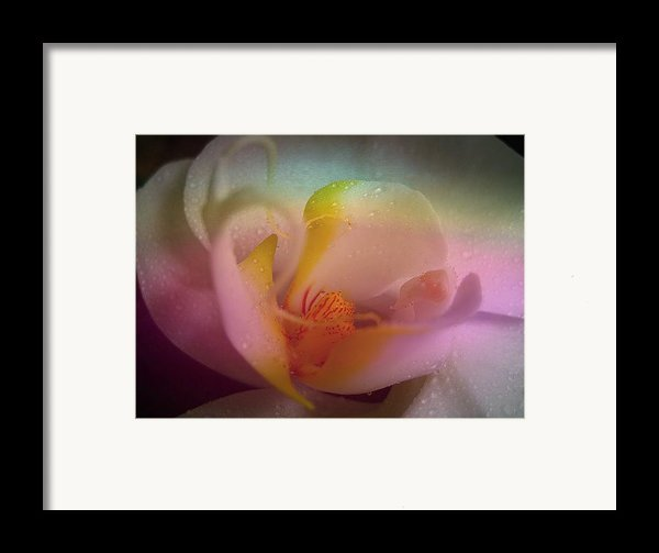 Orchid Splendor Framed Print By Shirley Sirois