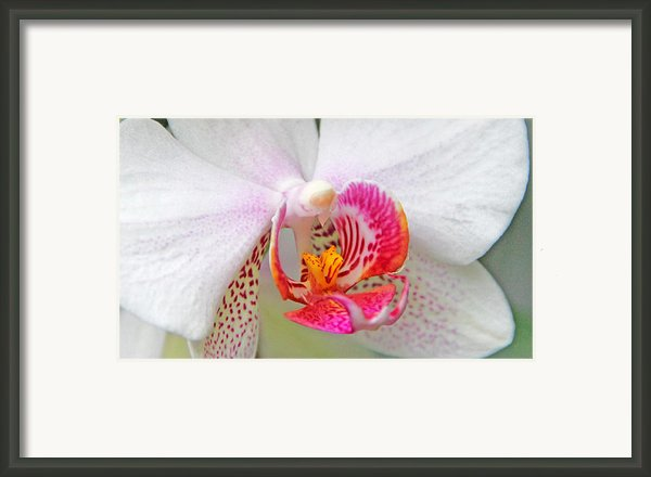 Orchids 10 Framed Print By Becky Lodes