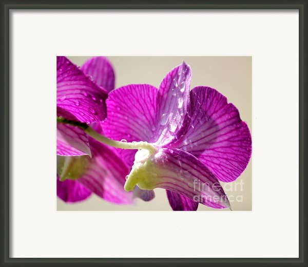 Orchids And Raindrops Framed Print By Theresa Willingham